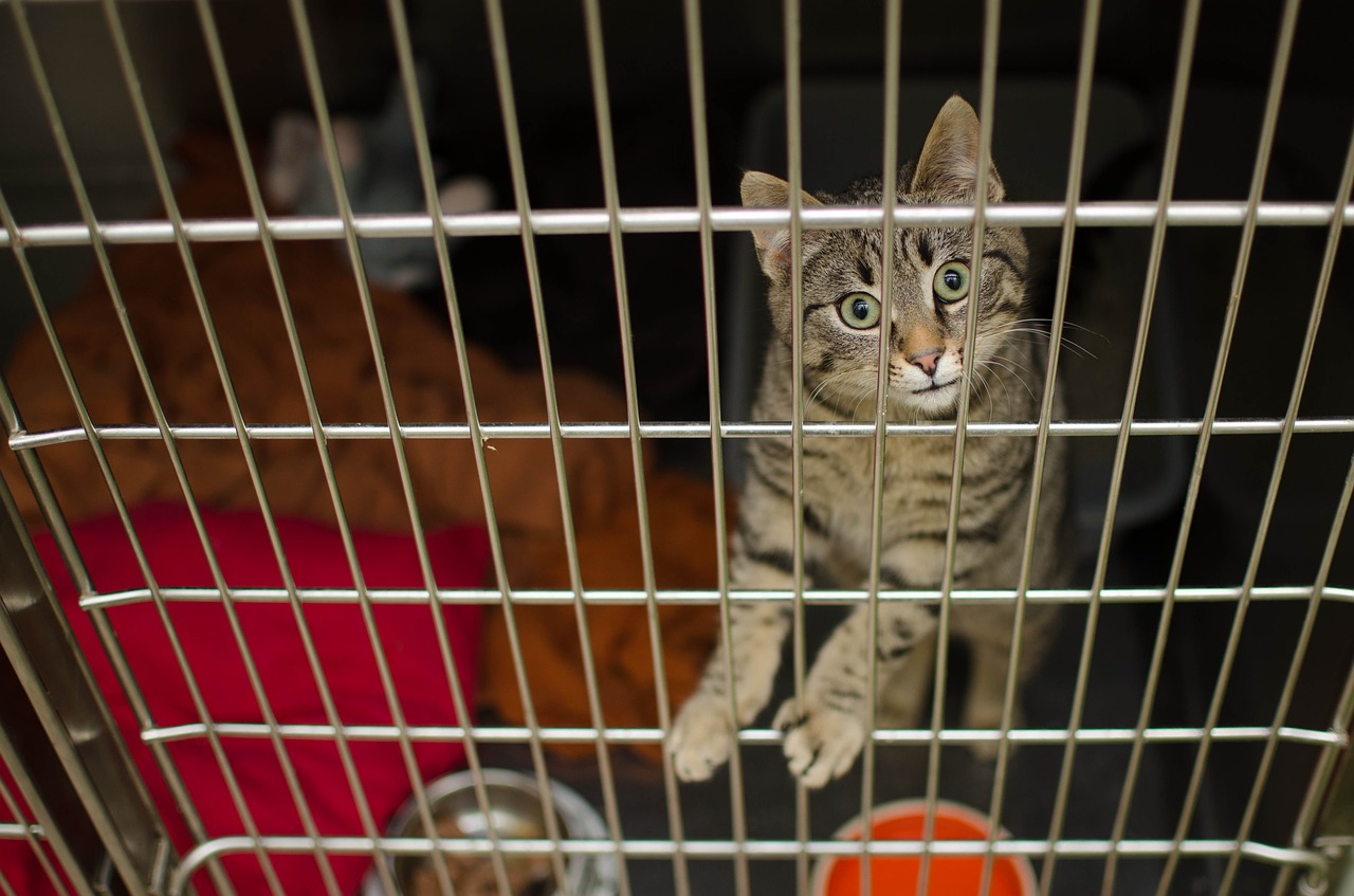 Cat in the cage