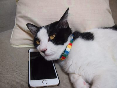 cat on couch with phone