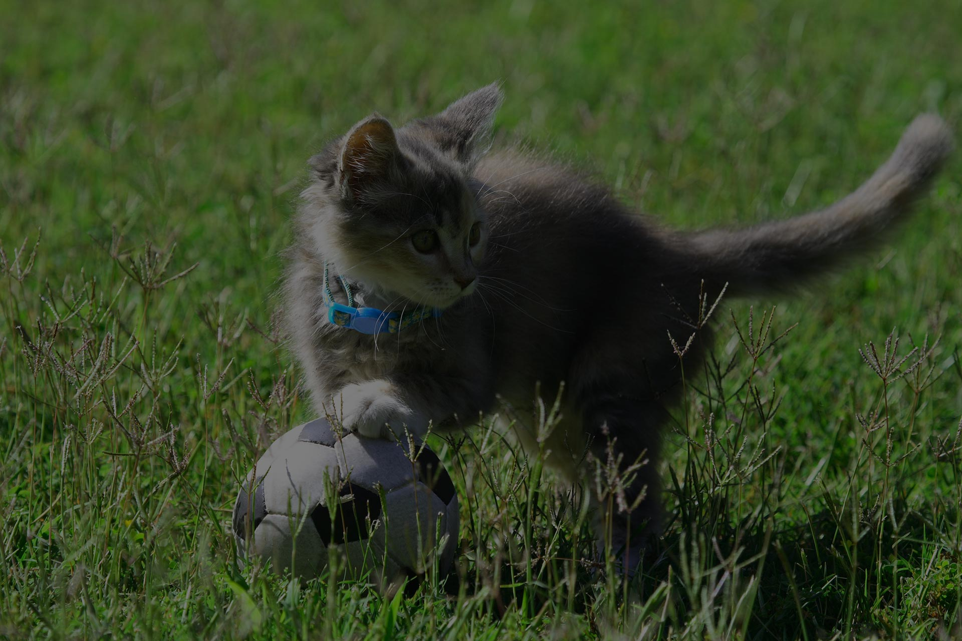 A kitten playing with a soccer ball