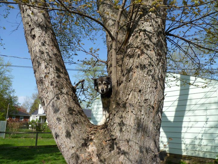 Dog on the the tree