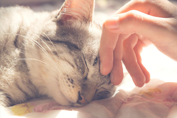 woman hand petting a cat head
