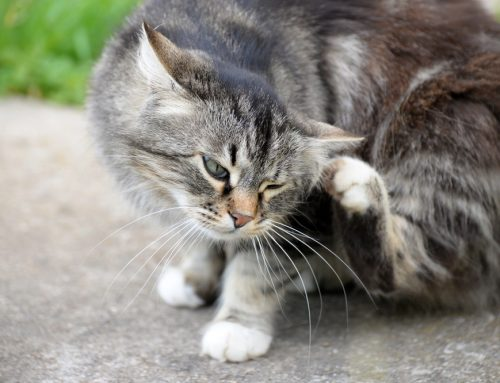 Springtime is Flea Time: How to Protect Your Pets