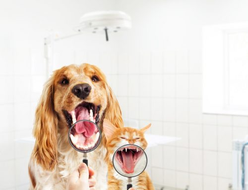Protecting Those Pearly Whites: Dental Care for Your Pet