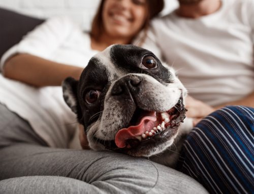 10 Reasons Why You Should Take Care of Your Pet's Teeth