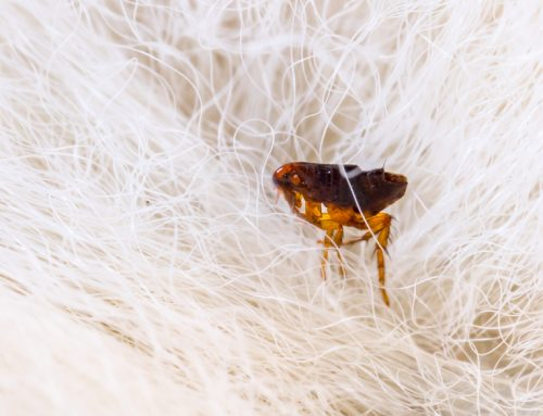 4 Dangerous Parasitic Diseases Every Pet Owner Should Know About