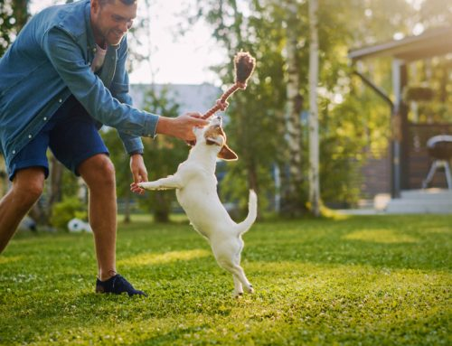 5 Ways to Boost Your Pet's Physical Fitness