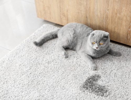 Puddles of Problems—Feline Inappropriate Urination