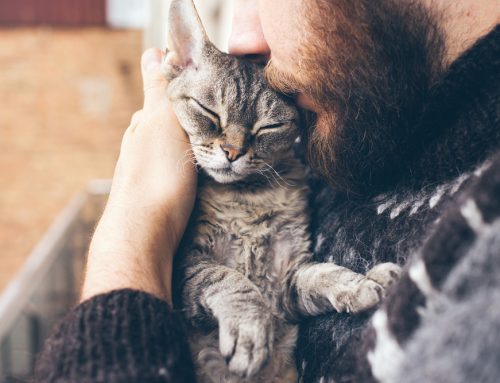 No Filter—Kidney Failure in Pets